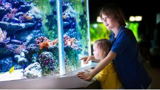 Развлечения и экскурсии для детей в Москве! Морской аквариум на Чистых прудах!