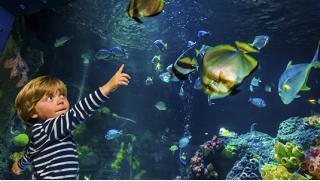 Купон на развлечения! Экскурсия в океанариум «Морской аквариум на Чистых прудах» для детей и взрослых! Скидка до 51%!